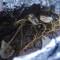 Magret de canard en papillote au barbecue